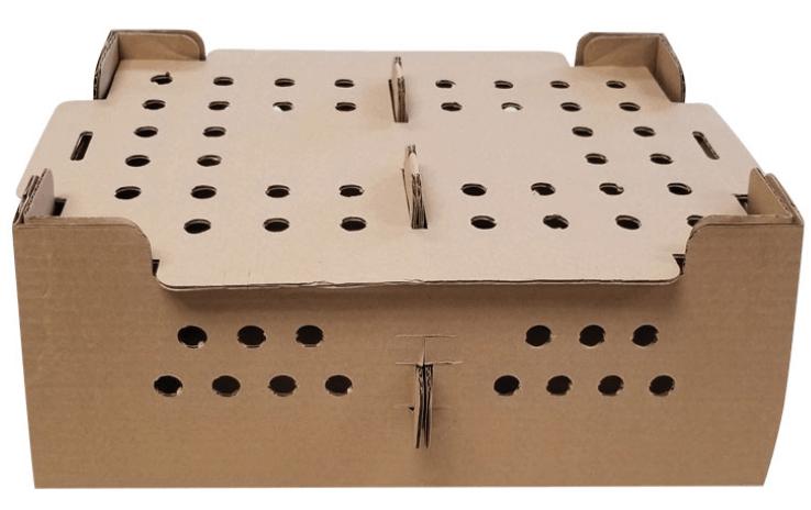 bird shipping box